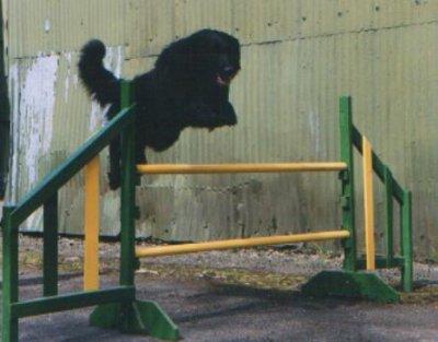Fyke jumping